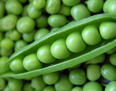 Fresh Peas - with thanks to Gerry the Cook