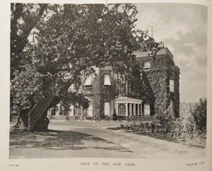 Seat in the Oak Tree